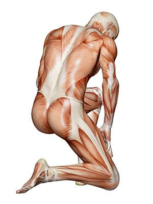 Yoga Therapy Muscular skeletal course and Lower Back Pain